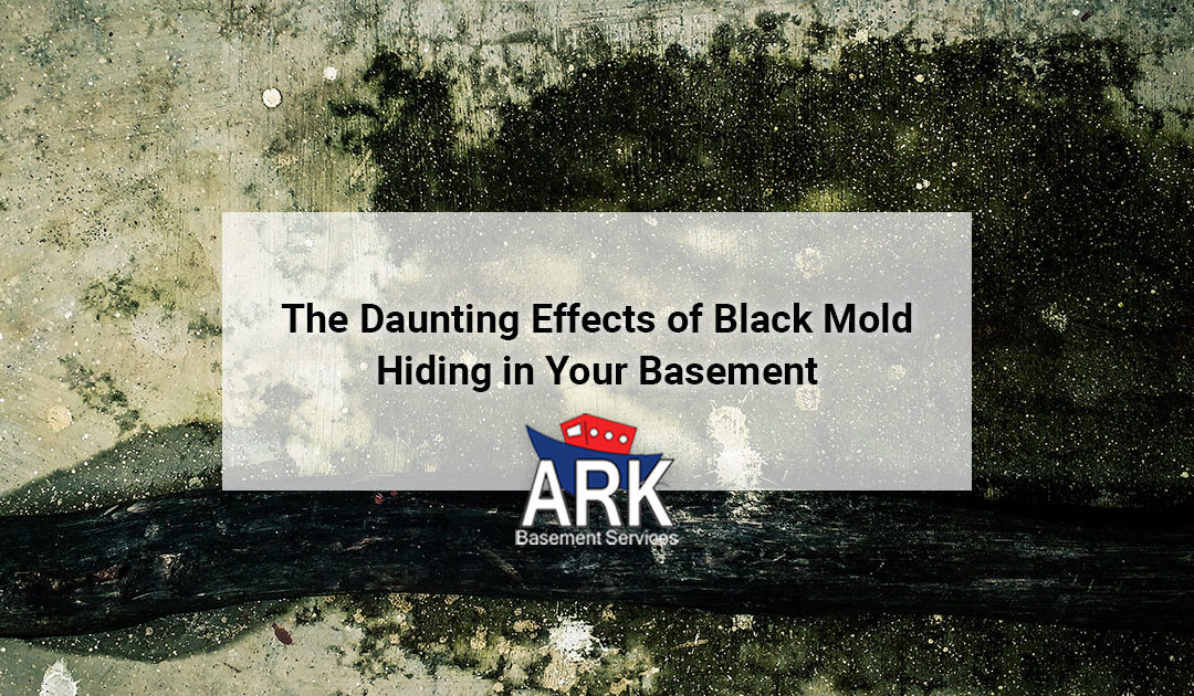 The Daunting Effects of Black Mold Hiding in Your Basement