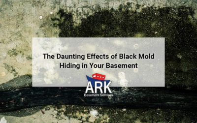 The Daunting Effects of Black Mold in Basements